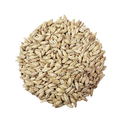 Brewers Malt