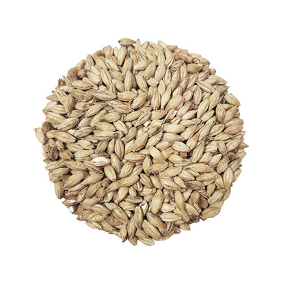 Golden Ale Malt