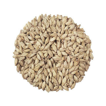 Pilsner Malt | Swedish